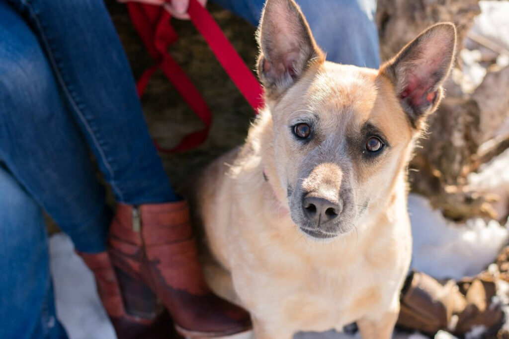 dog photography 1024x683 - Emily and Dez - Fargo Engagement
